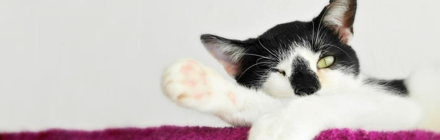Wybierz swój sposób pomocy kotom:)