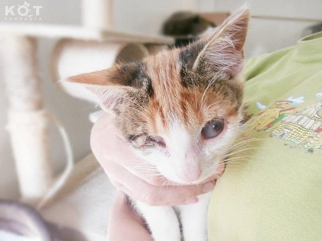niewidoma kotka