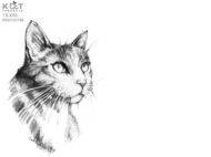 Tapeta 4 do 3 (4000×3000) – grafika Marta Brodowska