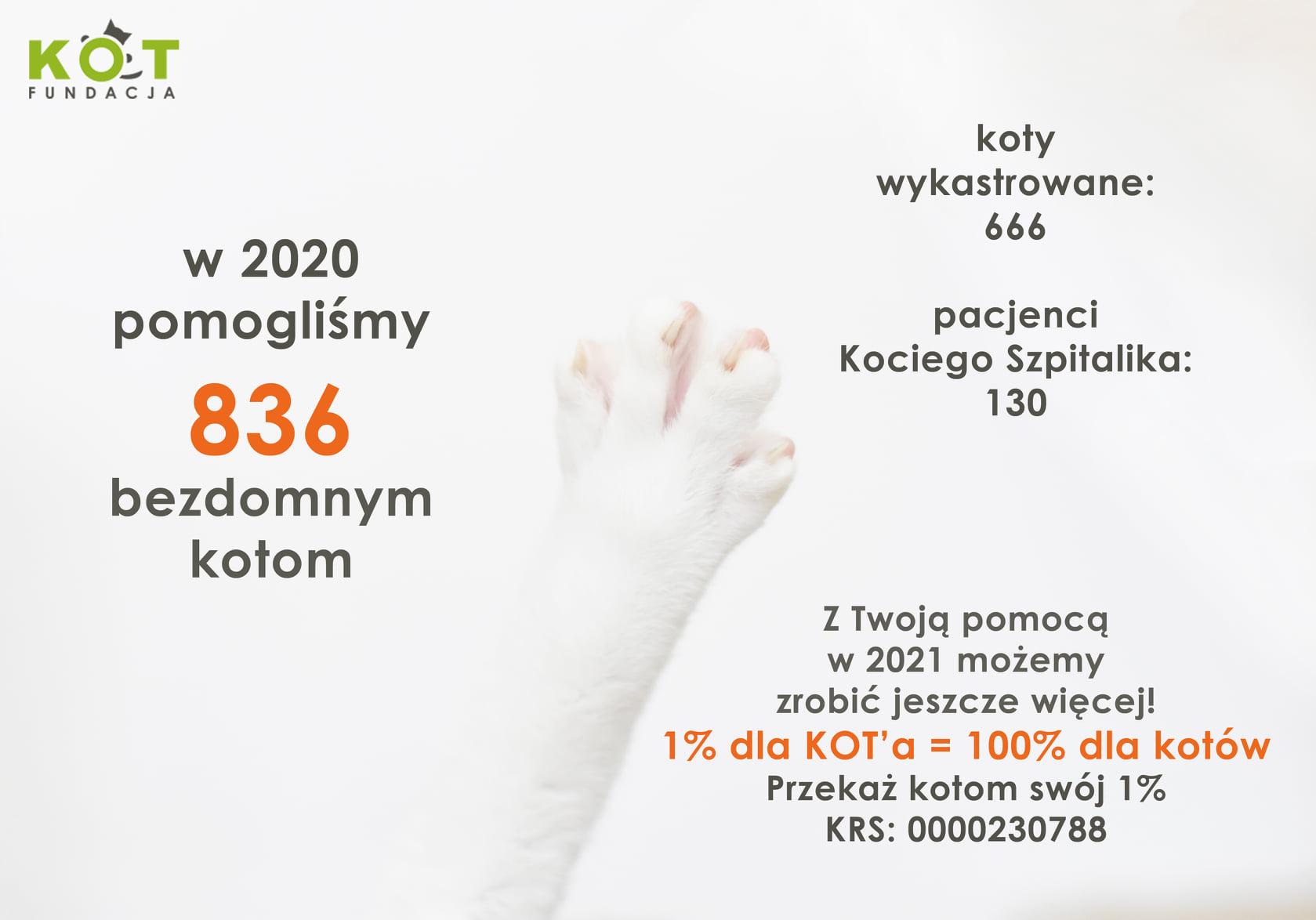 Fundacja KOT podsumowanie 2020 roku kastracja kotów bezdomnych